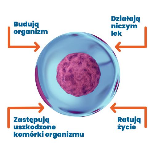 Czym są komórki macierzyste?