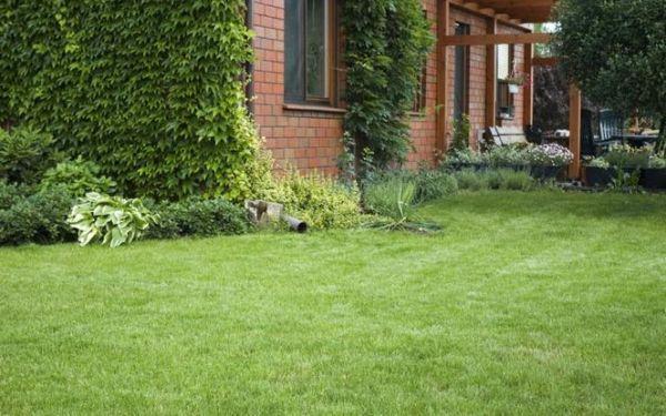 Trawa w ogrodzie: jaki rodzaj trawnika wybrać do ogrodu